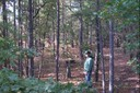 Pushmataha WMA plots harvest pine no burn.