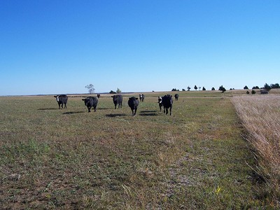 livestock bioclimatology and ecology Eco-systems of agricultural landscapes and sustainable land use: livestock systems 03 - livestock ecology - 2 biotic environmental factors msc integrated natural resource management.